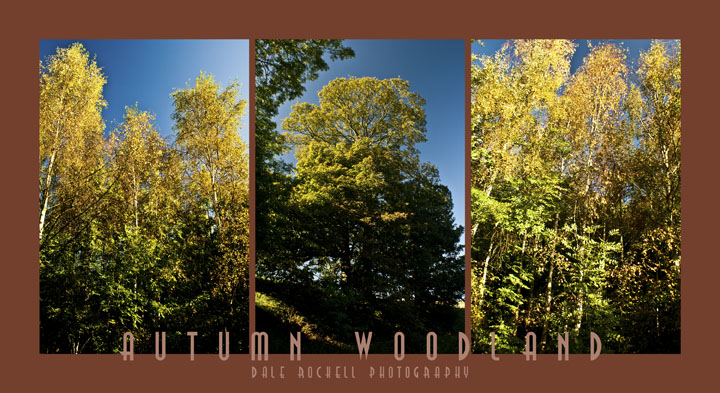 Autumn Woodland Collage - 3 Rectangles