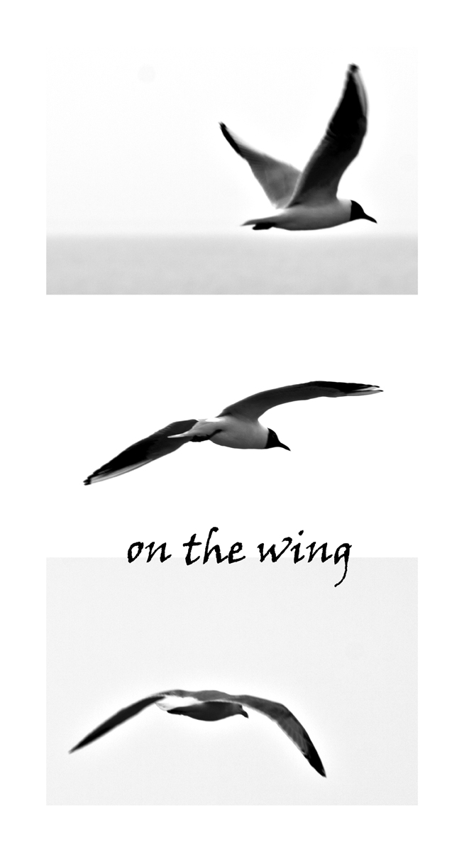 On The Wing_Three_Rectangles