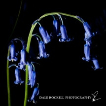 Bluebell Wood_19-05-13_IMG_1228