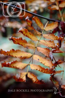 Autumn Colours_26-10-13_IMG_4517