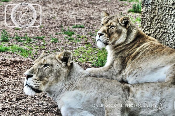 ZSL Whipsnade_IMG_6886_29-06-14_HDR