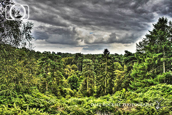 Rushmere_15-08-14_IMG_8362_HDR