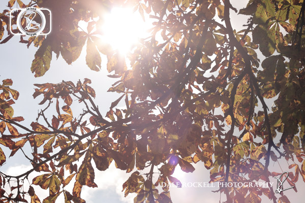 Autumn Leaves_Backlit_IMG_9152_12-09-14