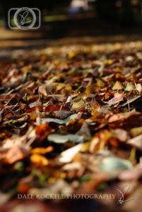 Autumn Leaves_IMG_9845_07-10-14