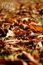 Autumn Leaves_IMG_9860_07-10-14