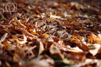 Autumn Leaves_IMG_9877_07-10-14