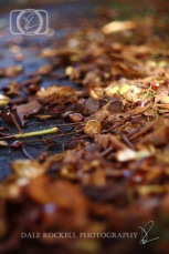 Autumn Leaves_IMG_9878_07-10-14