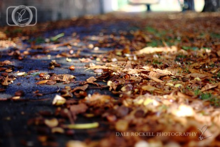 Autumn Leaves_IMG_9879_07-10-14