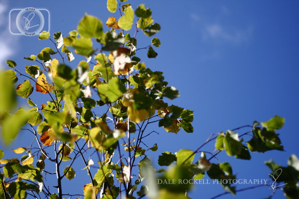 Autumn Leaves_IMG_9890_07-10-14