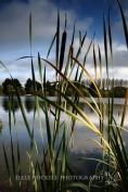 Bulrushes and Lake