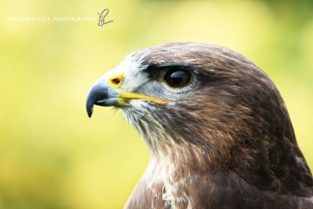 Feathers & Fur_24-05-15_IMG_4416