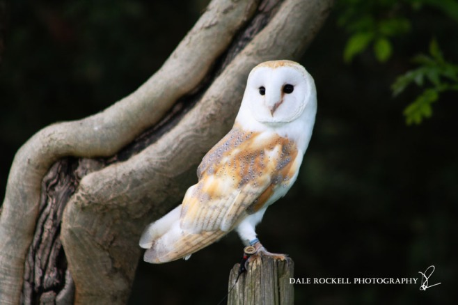 Feathers & Fur_24-05-15_IMG_4530