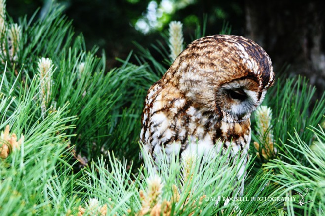 Feathers & Fur_24-05-15_IMG_4716