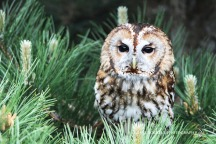 Feathers & Fur_24-05-15_IMG_4725