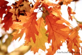 Autumn Leaves_IMG_7502_25-10-15