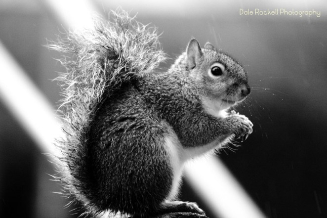 Squirrel_IMG_7953_11-12-15