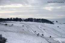 Bison Hill_Snow_IMG_8619_17-01-16
