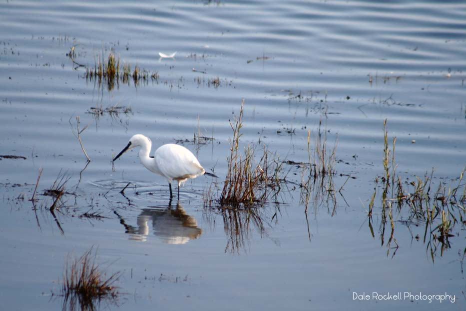 cley-marshes_img_3031_25-10-16