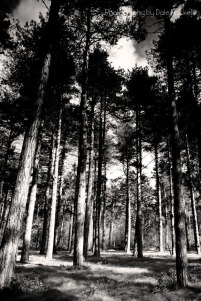 Thetford Forest_16-04-17_IMG_5432
