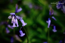 Bluebell Woods_IMG_1313_22-04-18