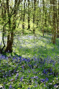 Bluebell Woods_IMG_1322_22-04-18