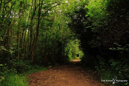 Linslade Wood_IMG_2576_23-06-18